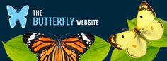The Butterfly WebSite