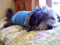 Size Small Crochet Dog Sweater