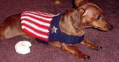 Patriotic dog jacket