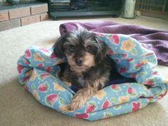 polar fleece dog nest