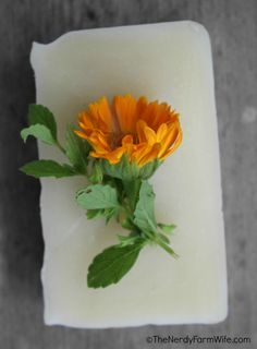 Calendula Soap Recipe